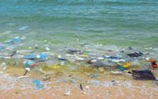 Places - Beach with plastic waste 517 - Copyright www.stockadobe.com